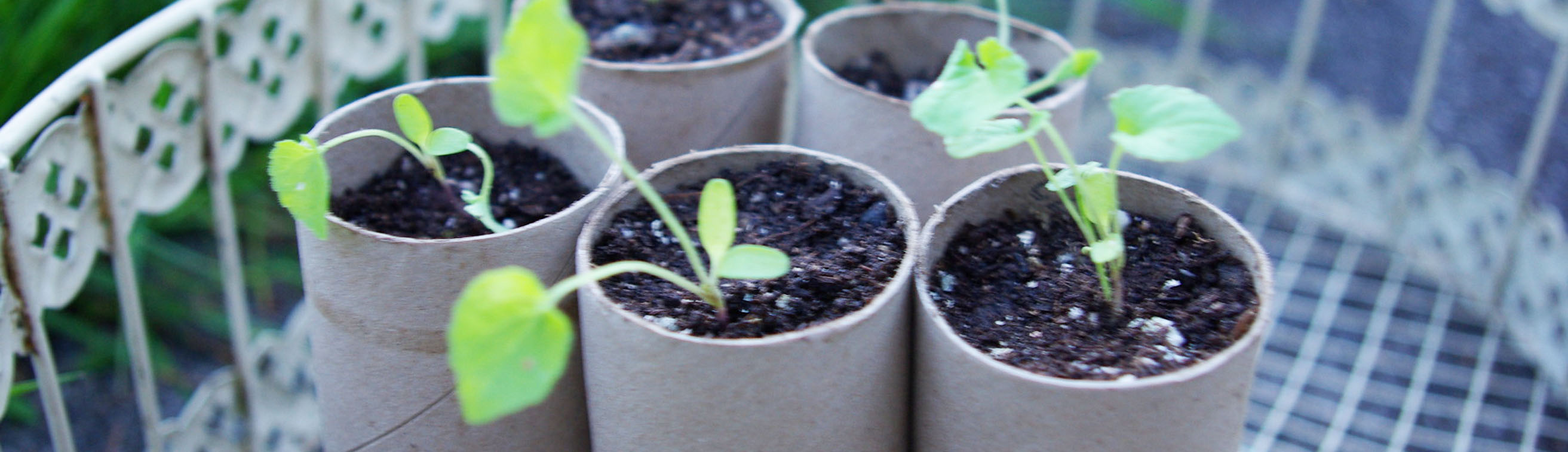 The other planter alternatives for starting seeds for Alternative planters